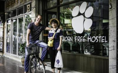 Hostelek és Ifjúsági Szállások - Born Free Hostel - Vista